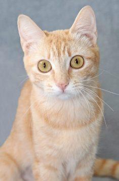 Sue cat.jpg